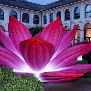 breathingflowerlille