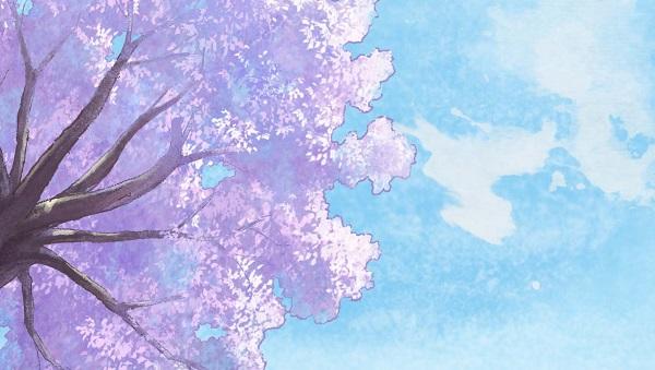 tabimachilateshow cerisier