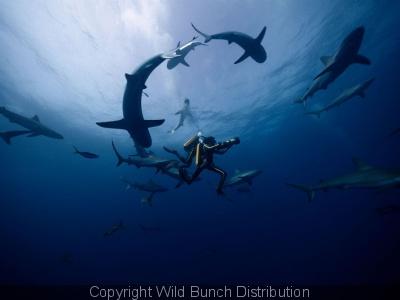 224406-l-odyssee-critique-et-bande-annonce-du-tres-beau-film-sur-cousteau
