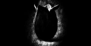 Une première bande annonce pour Alien : Covenant