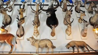 Le Musée de la Chasse et de la Nature où comment dépoussiérer la chasse