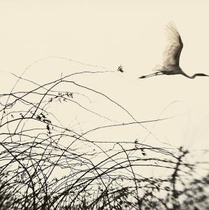 La photographe Elena Lyakir à la Galerie Claude Samuel