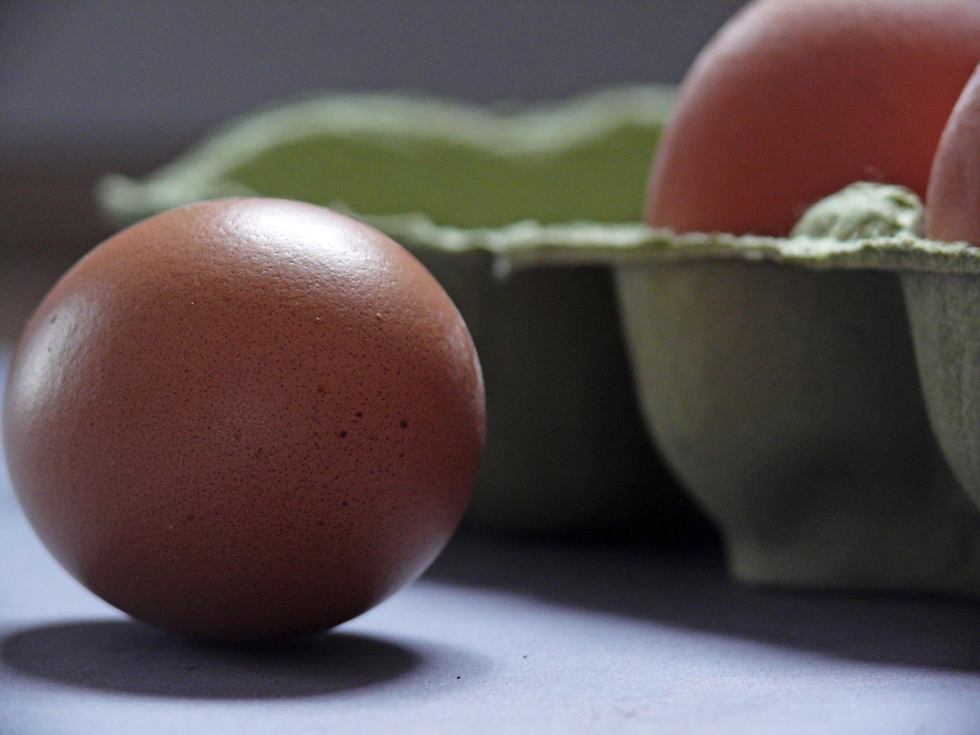egg-1803368_1920