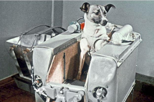 La chienne Laika