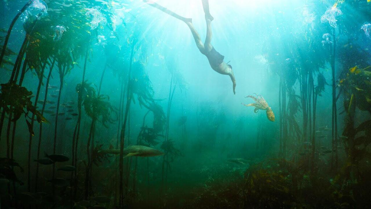 La Sagesse de la Pieuvre : la thérapie profondément touchante d'un plongeur