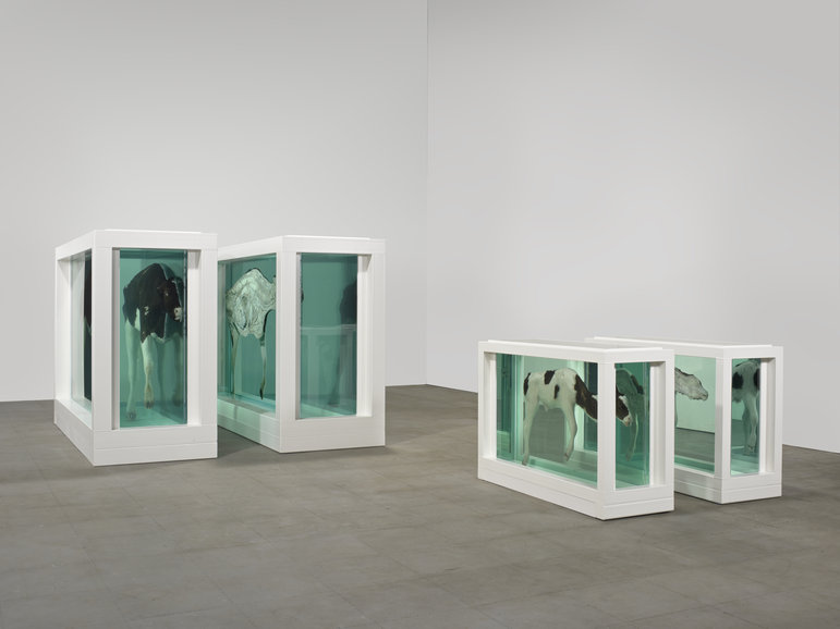 "Damien Hirst, ""Mother and Child, Divided"", sculpture - installation, 1993. (Source : site de l'artiste)"